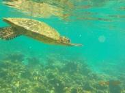 Maldives Turtles so friendly