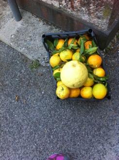 Enormous lemons=limoncello!