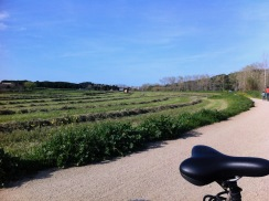 Cycling near Parafrugell