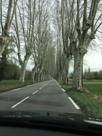 Avenues of trees and wide roads??