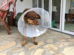 Not a happy boy