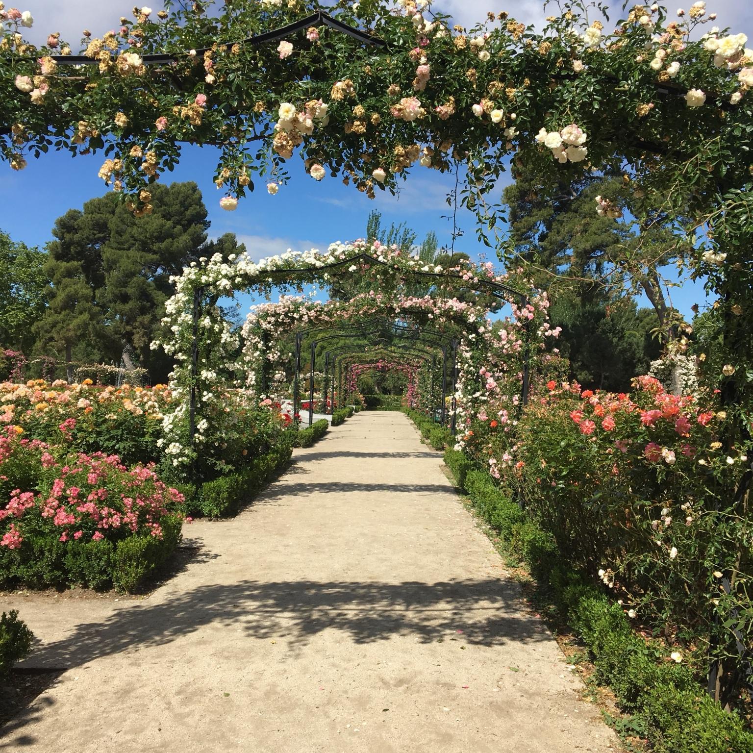 Buen Retiro Park rose gardens