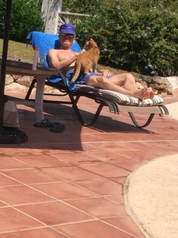 Pooltime with the cat