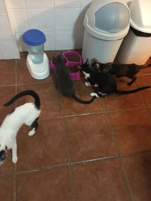 All kittens scrabbling for food
