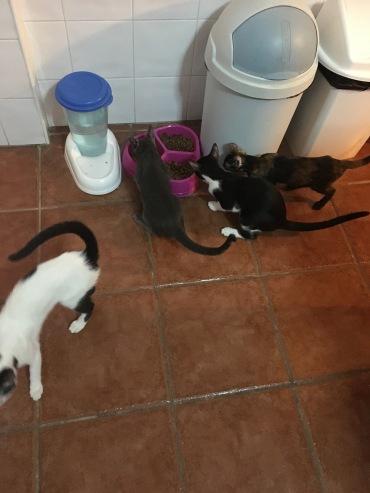 All kittens scrabbling for food