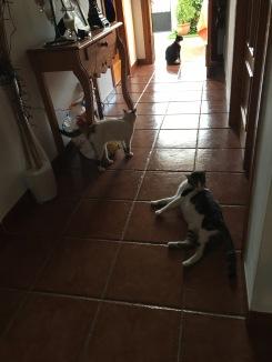 Tom, Jess, Lucy