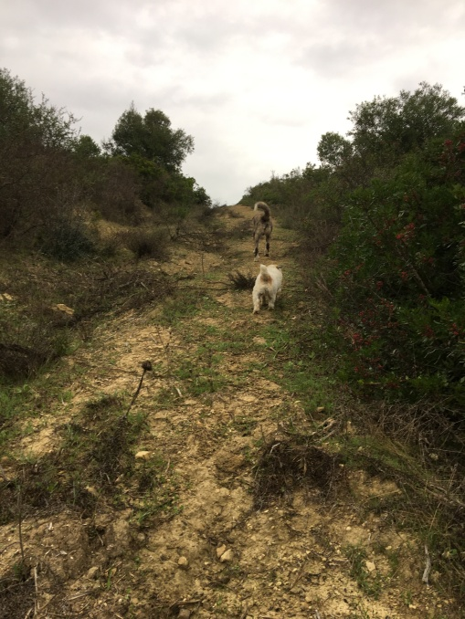 Heading bush