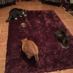 Max, Bentley, Benjamin