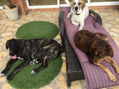 Bruno, Pepe and Schoshie