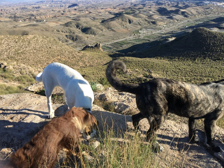 Big dogs, big views